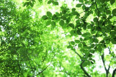 """【イベント企画・運営】ともにつくるサイセンタン!「音でつながる人と環境~あなたは自然の""""声""""が聞こえますか?」"""